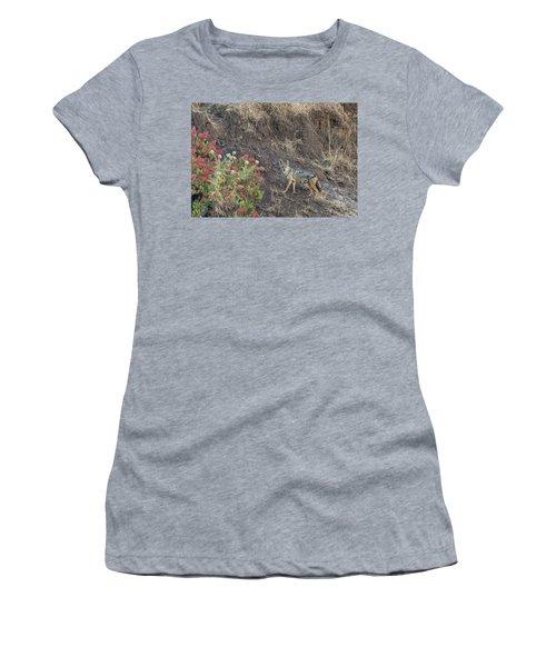 Women's T-Shirt featuring the photograph Black Backed Jackal by Alex Lapidus