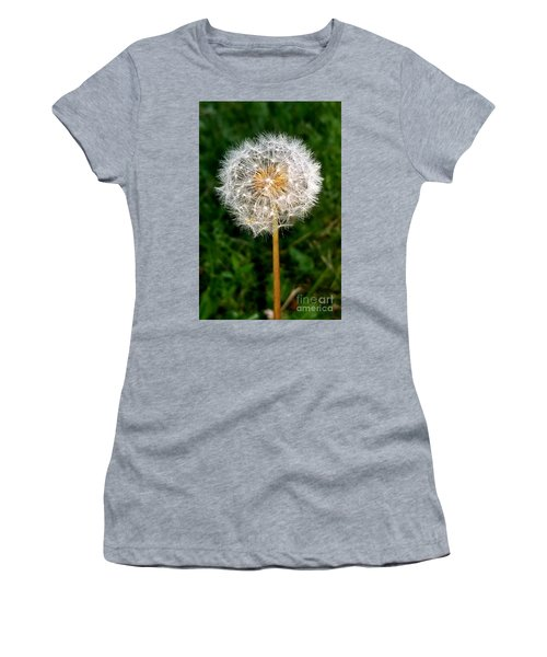 Dandelion 1 Women's T-Shirt