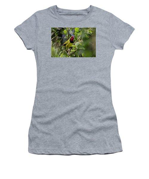 Doherty's Bushshrike Women's T-Shirt