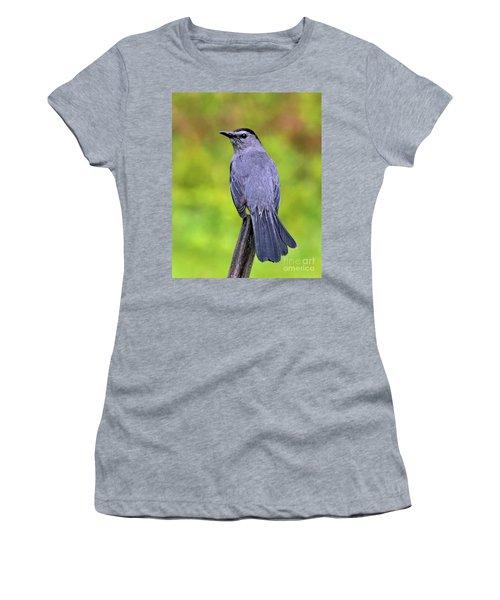 Grey Catbird Women's T-Shirt