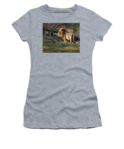 Male Lion In Botswana Women's T-Shirt