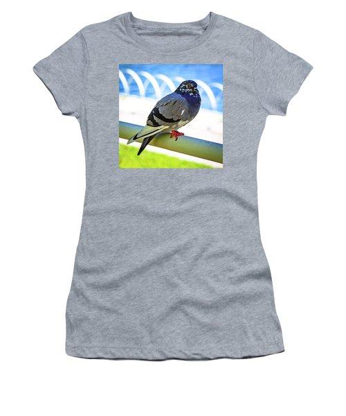 Mr. Pigeon Women's T-Shirt
