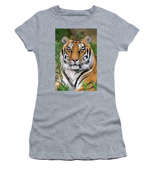 Siberian Tiger Staring Endangered Species Wildlife Rescue Women's T-Shirt