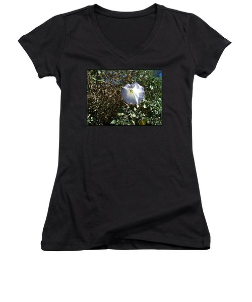 Women's V-Neck T-Shirt (Junior Cut) featuring the photograph  Sacred Datura by Angela J Wright