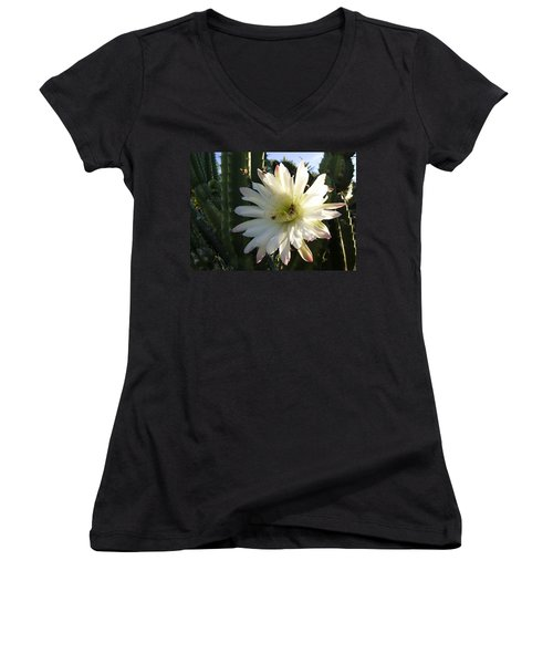 Flowering Cactus 1 Women's V-Neck T-Shirt (Junior Cut) by Mariusz Kula