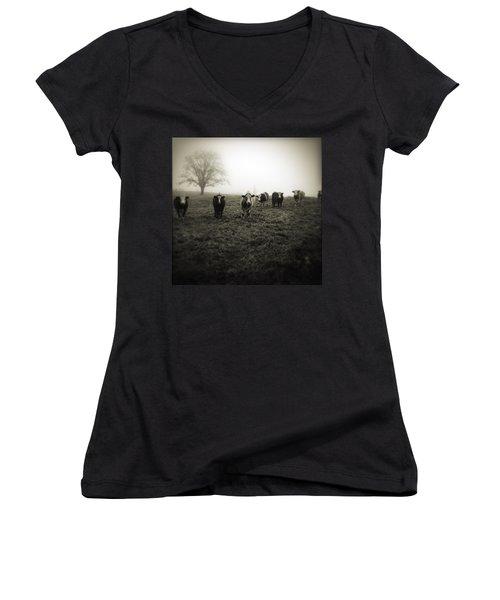 Livestock Women's V-Neck T-Shirt