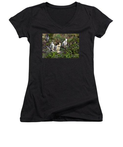 Baby Anhinga Women's V-Neck T-Shirt (Junior Cut) by Mark Newman