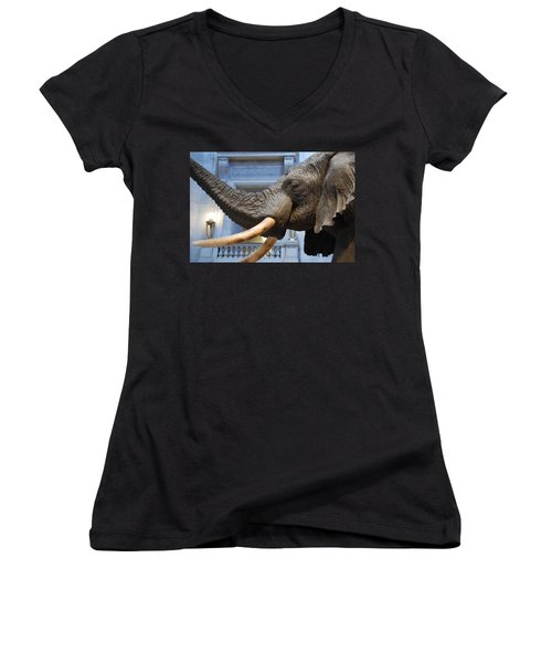 Bull Elephant In Natural History Rotunda Women's V-Neck