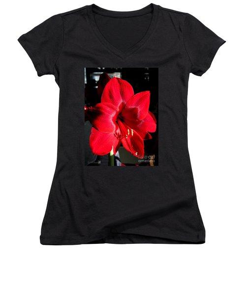 Amaryllis Named Black Pearl Women's V-Neck T-Shirt (Junior Cut) by J McCombie