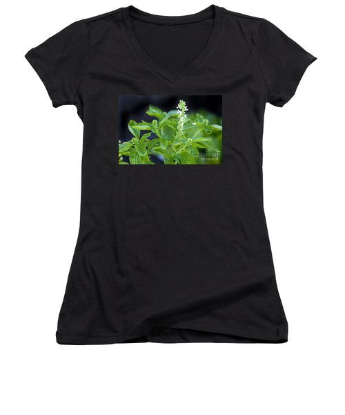 Women's V-Neck T-Shirt (Junior Cut) featuring the photograph Basil With White Flowers Ready For Culinary Use by David Millenheft