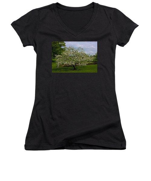 Women's V-Neck T-Shirt (Junior Cut) featuring the painting Birth Of Apples by John Haldane
