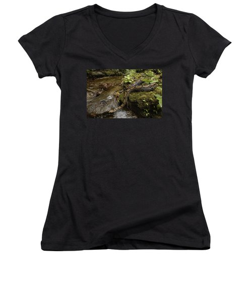Boa Constrictor Crossing Stream Women's V-Neck T-Shirt (Junior Cut) by Pete Oxford
