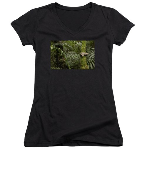Boa Constrictor In The Rainforest Women's V-Neck T-Shirt (Junior Cut) by Pete Oxford