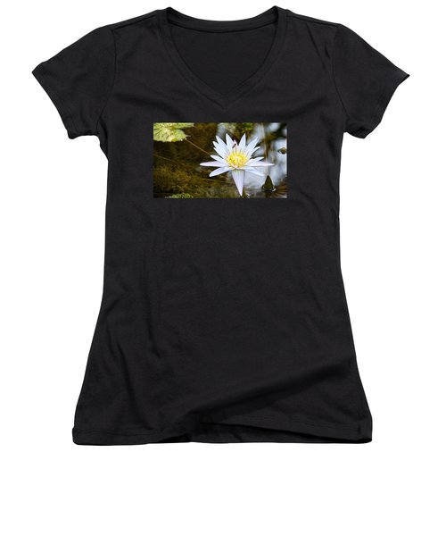 Busy Bee Women's V-Neck T-Shirt (Junior Cut) by Dave Files