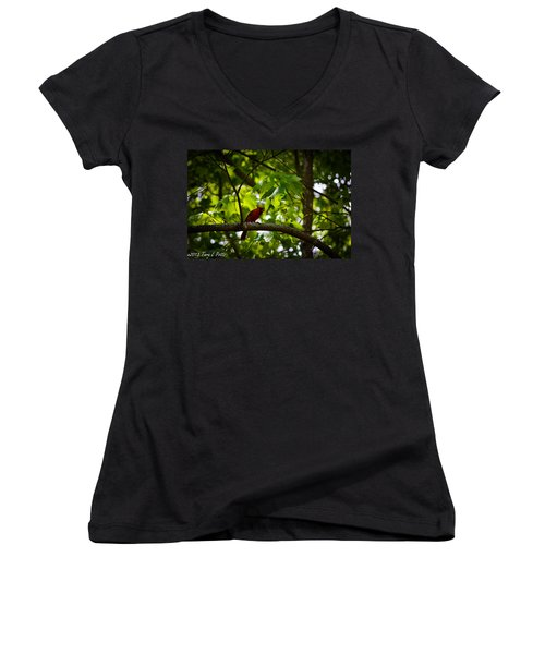 Cardinal In The Trees Women's V-Neck T-Shirt