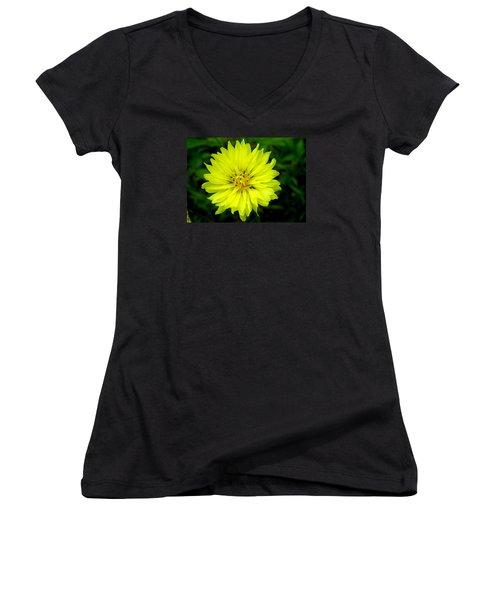Wild Carolina Desert Chicory Women's V-Neck T-Shirt (Junior Cut) by William Tanneberger