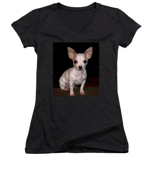 Chihuahua Puppy Women's V-Neck T-Shirt (Junior Cut) by Maria Urso