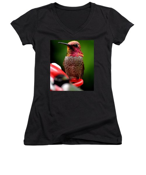 Women's V-Neck T-Shirt (Junior Cut) featuring the photograph Colorful Male Anna Hummingbird On Perch by Jay Milo