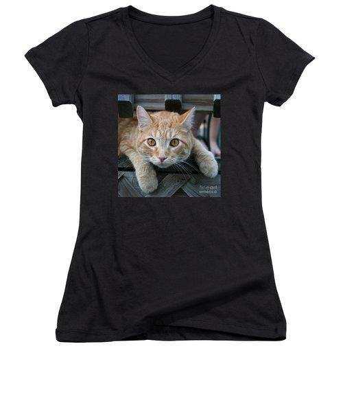 Cool Cat Named Calvin Women's V-Neck