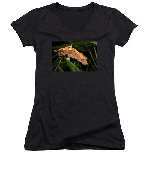 Crested Gecko Rhacodactylus Ciliatus Women's V-Neck