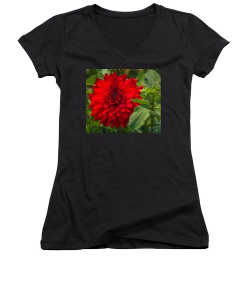Dahlia Perfection Women's V-Neck T-Shirt