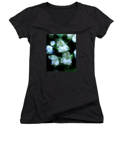Women's V-Neck T-Shirt (Junior Cut) featuring the photograph Downy Rattlesnake Plantain Orchid by William Tanneberger