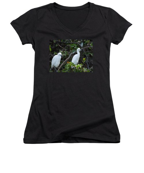Egret Chicks Waiting To Be Fed Women's V-Neck T-Shirt (Junior Cut) by Ron Davidson