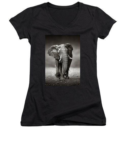 Elephant Approach From The Front Women's V-Neck T-Shirt (Junior Cut) by Johan Swanepoel
