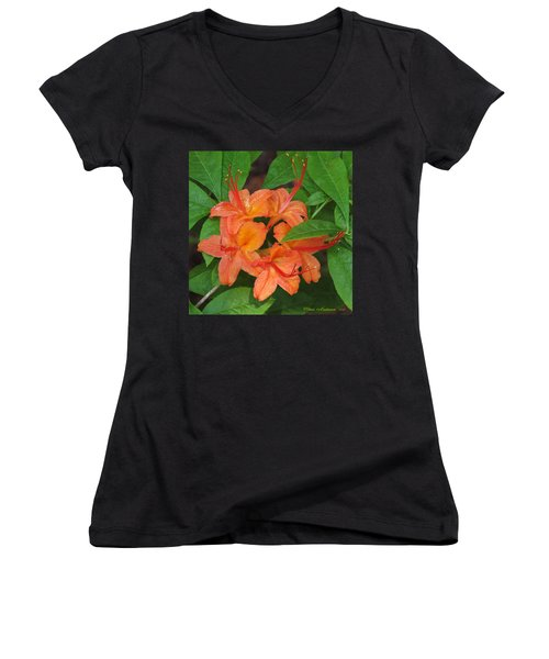 Women's V-Neck T-Shirt (Junior Cut) featuring the photograph Flame Azalea by Chris Anderson
