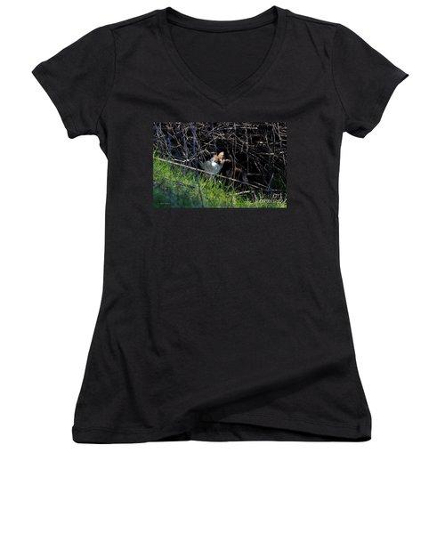 Frightened Feral Calico  Women's V-Neck T-Shirt (Junior Cut)