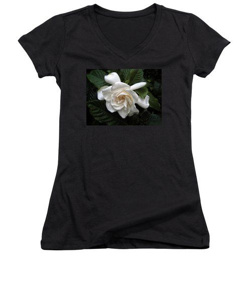 Gardenia Women's V-Neck