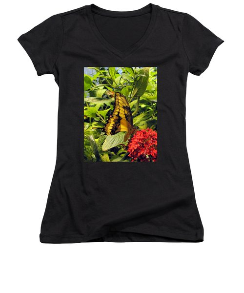 Gold Giant Swallowtail Women's V-Neck (Athletic Fit)