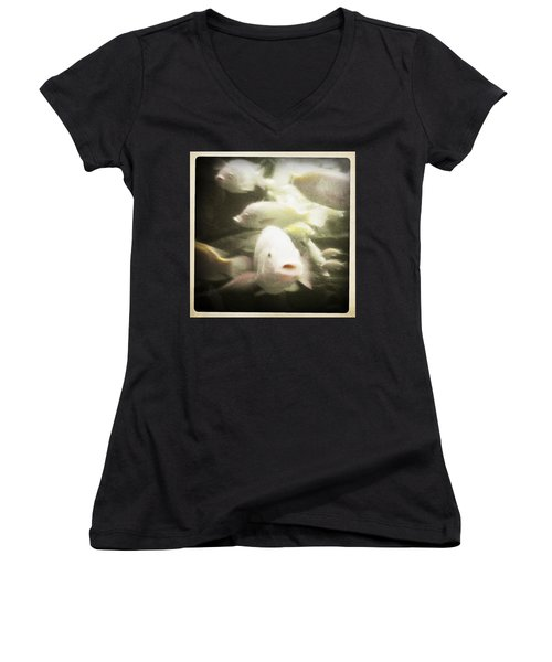 Gouramis Women's V-Neck T-Shirt (Junior Cut) by Bradley R Youngberg