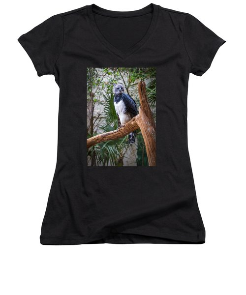 Harpy Eagle Women's V-Neck (Athletic Fit)