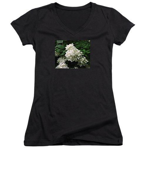 Hydrangea Arborescens ' Annabelle ' Women's V-Neck T-Shirt (Junior Cut) by William Tanneberger