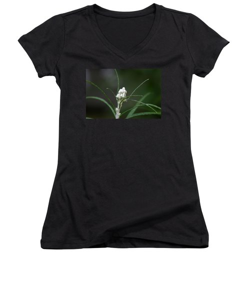 Women's V-Neck T-Shirt (Junior Cut) featuring the photograph Just Budding by Denyse Duhaime
