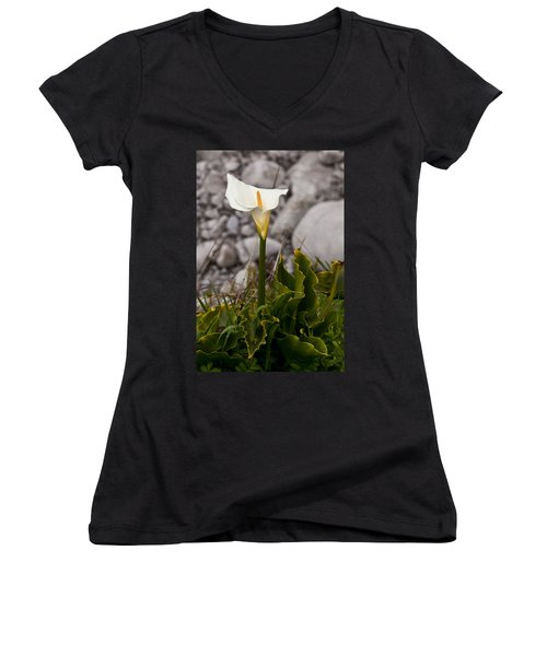 Lone Calla Lily Women's V-Neck T-Shirt (Junior Cut) by Melinda Ledsome
