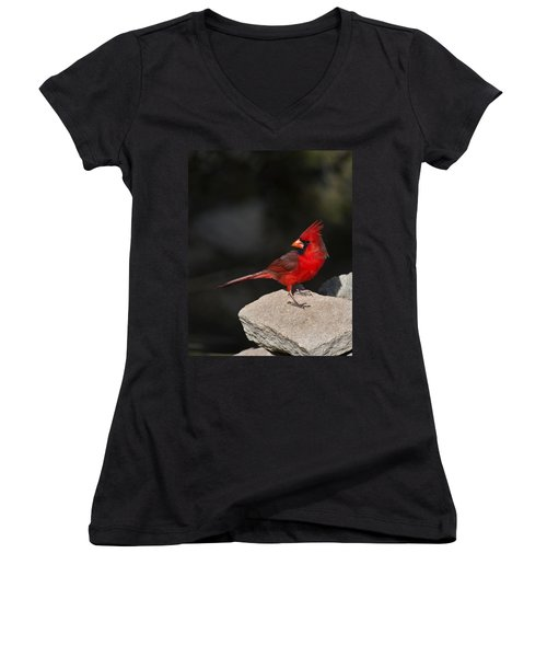 Male Cardinal Women's V-Neck T-Shirt