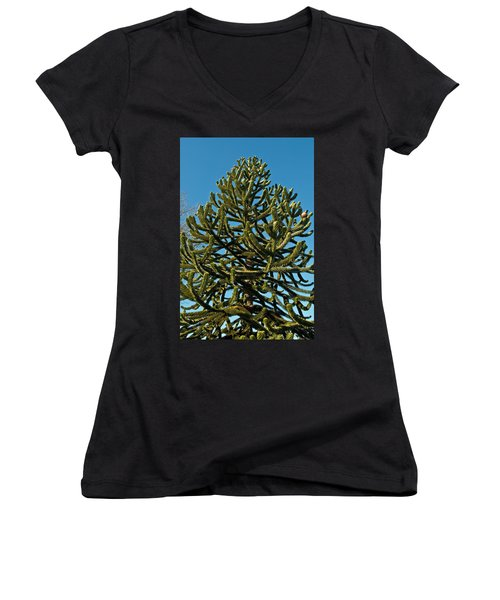 Monkey Puzzle Tree E Women's V-Neck (Athletic Fit)