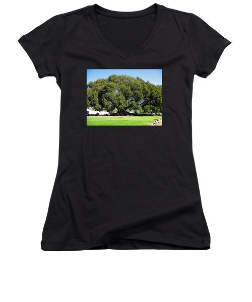 Moreton Fig Tree In Santa Barbara Women's V-Neck T-Shirt