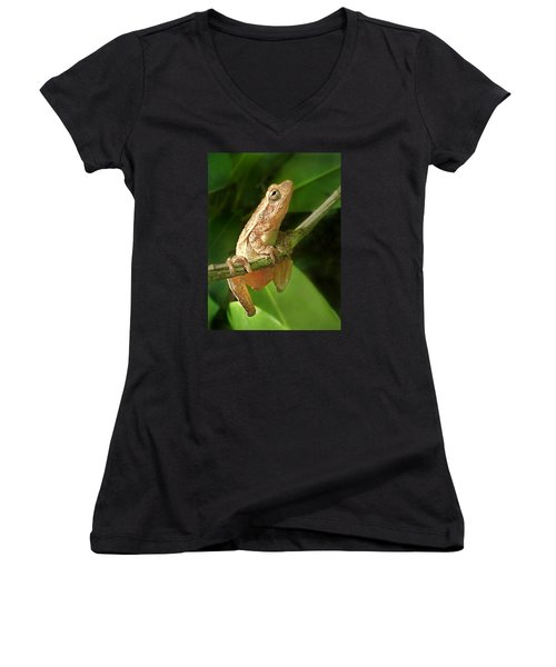 Northern Spring Peeper Women's V-Neck T-Shirt (Junior Cut) by William Tanneberger