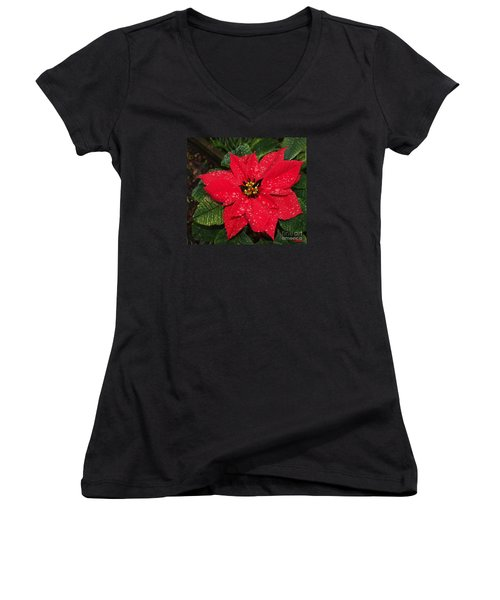 Poinsettia - Frozen In Time Women's V-Neck T-Shirt (Junior Cut) by Philip Bracco