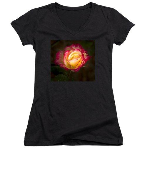 Portrait Of A Double Delight Rose Women's V-Neck T-Shirt
