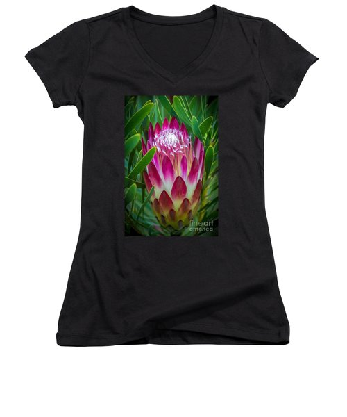 Protea In Pink Women's V-Neck T-Shirt