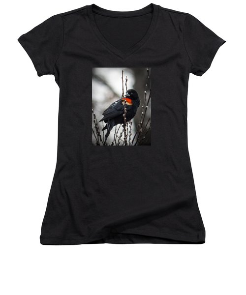 Red Winged Blackbird In Pussy Willows Women's V-Neck T-Shirt (Junior Cut) by Patti Deters