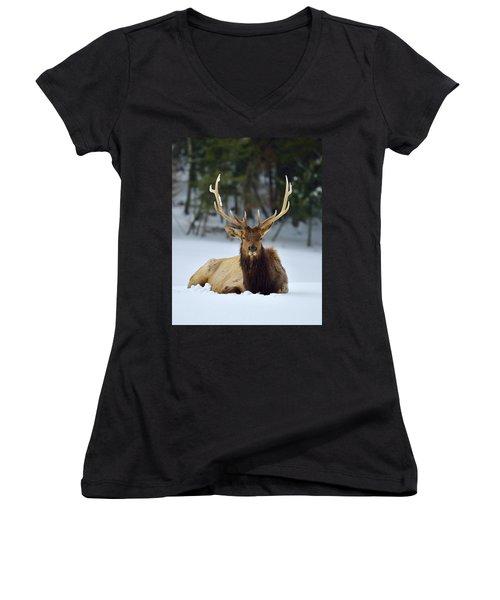 Rocky Mountain Elk Women's V-Neck T-Shirt