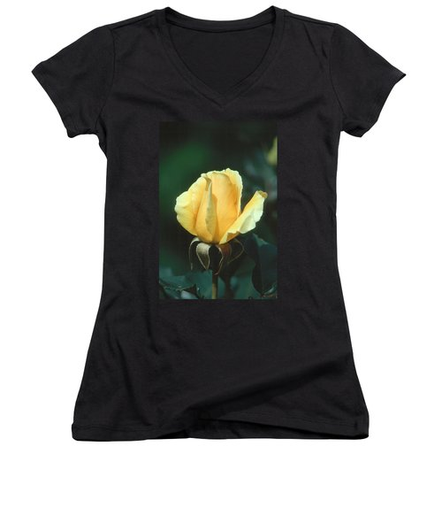 Rose 2 Women's V-Neck T-Shirt (Junior Cut) by Andy Shomock