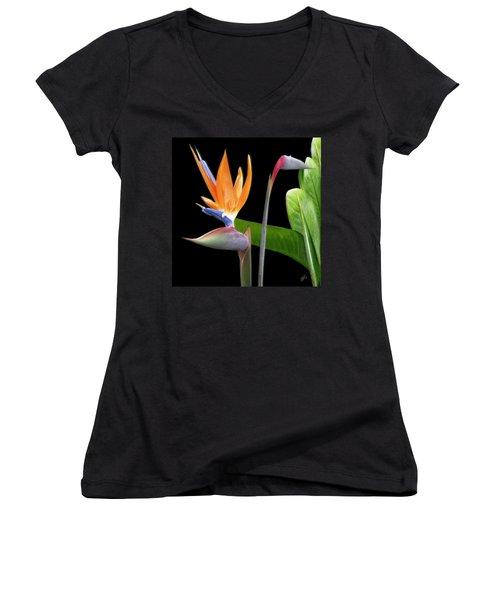 Royal Beauty II - Bird Of Paradise Women's V-Neck (Athletic Fit)