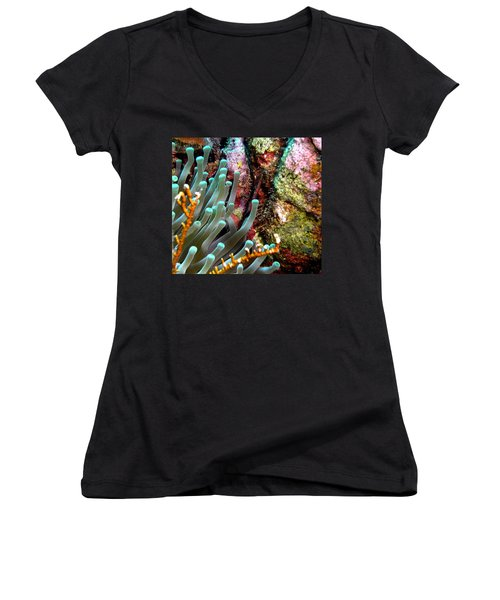 Sea Anemone And Coral Rainbow Wall Women's V-Neck T-Shirt (Junior Cut) by Amy McDaniel