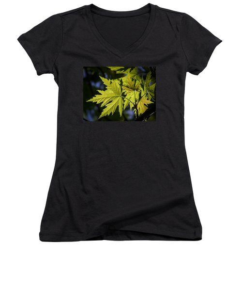 Silver Maple Women's V-Neck T-Shirt